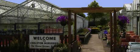 Chelston Nurseries