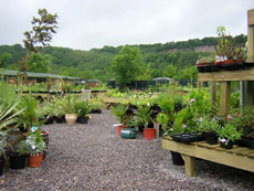 Cove Garden Nursery