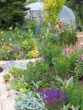 Dorset-Perennials-(1)