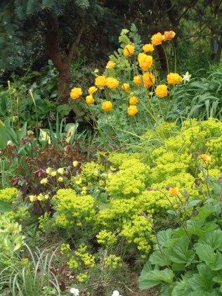 Dorset-Perennials-(2)
