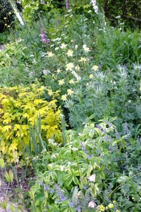 Dorset-Perennials-(3)