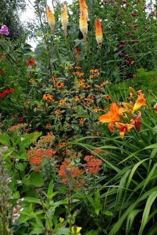 Dorset-Perennials-(4)