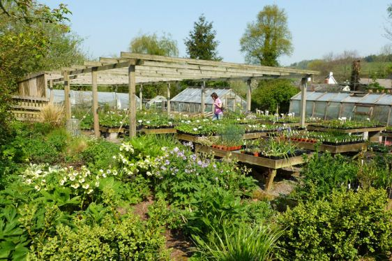 Elworthy Cottage 1
