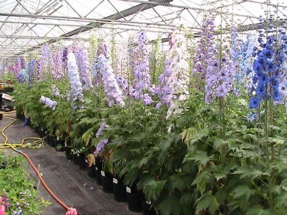 Newport Mills Blooms for Chelsea Flower Show