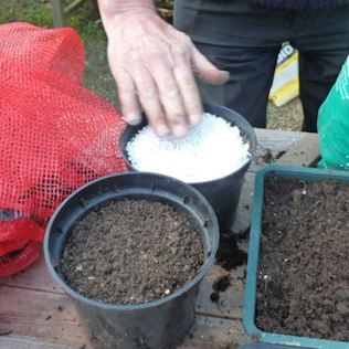 7. Put a layer of inert material, eg Perlite, on the top of the compost. Keep the cuttings watered.