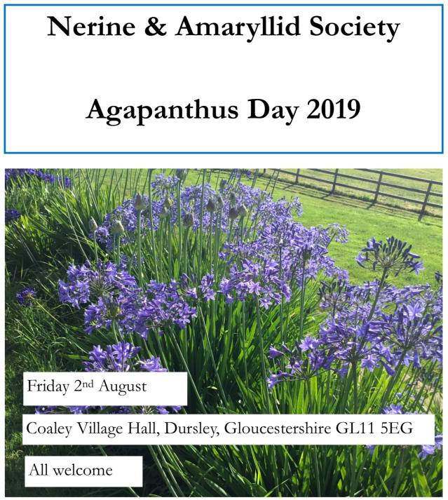 Nerine Amaryllid Society Agapanthus Day 2019 Somerset Hardy